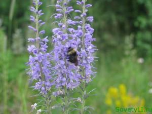 Укусы насекомых - рекомендации по лечению