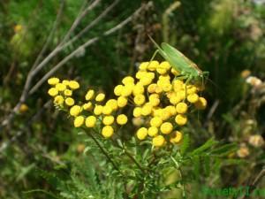 Август - лекарственные травы