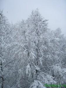 Снежная магия заговор на достаток