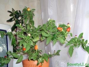 Как вырастить комнатные цветы из семян