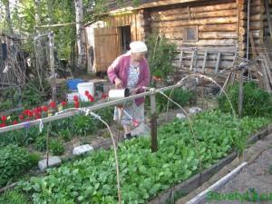 Сеем редис, салаты и зелень