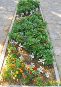 Создаем цветник - клумба рабатка, длинная цветочная грядка