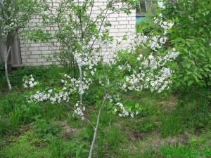 Какие растения куда сажать