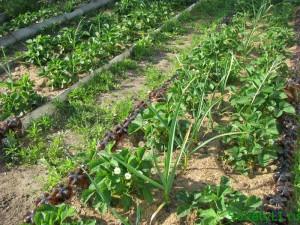 Растения-«защитники в саду