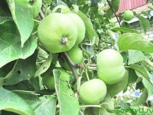 Как собирать яблоги