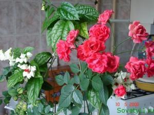 Болезни комнатных цветов