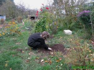 Осенняя работа в цветнике сада
