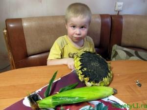 Подсолнечные семечки польза и вред