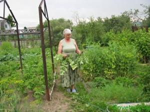 Летние заговоры в саду от сорняков и вредителей