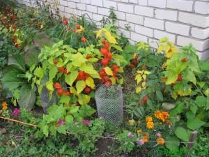 Осенняя работа в цветнике