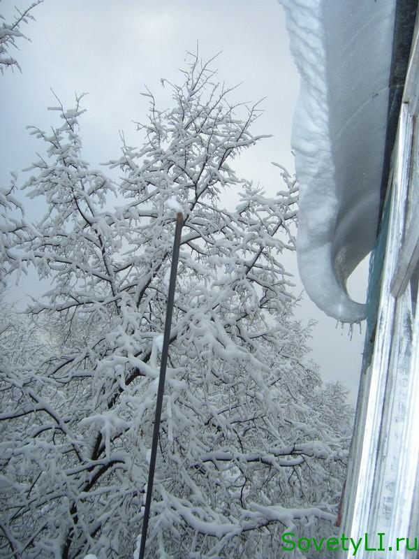Как защитить зимний сад от грызунов