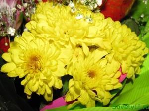 Цветочные приметы - хризантема