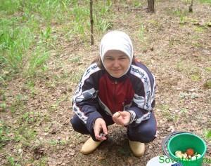 Где и как собирать грибы