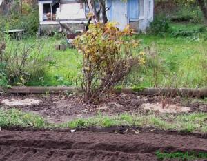 Укрываем растения на зиму
