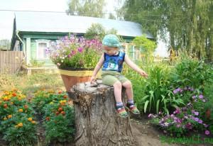Петунья - выращивание рассады, цветы в парке