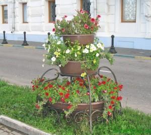 Петунья - выращивание рассады, городская клумба