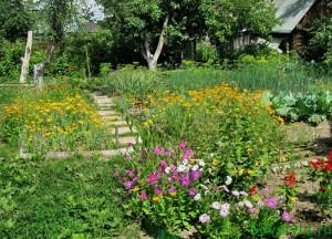 Полезные цветы в саду и огороде