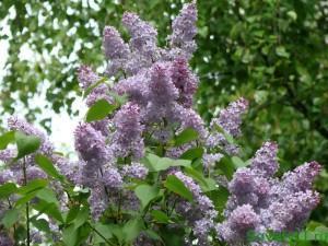 Весенние лекарственные растения