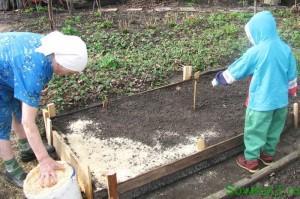Посадка моркови для хранения, мульчирование грядки опилками