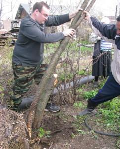 Выкорчевка деревьев на садовом участке