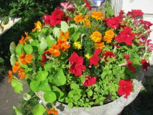 Вазон с цветами у дома
