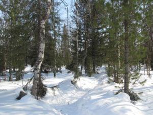 Сугробы в лесу