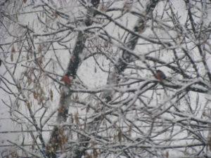 зима в феврале